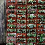 MayDae Backyard Succulent Wall