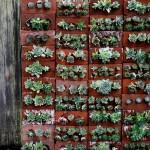 MayDae Backyard Succulent Wall