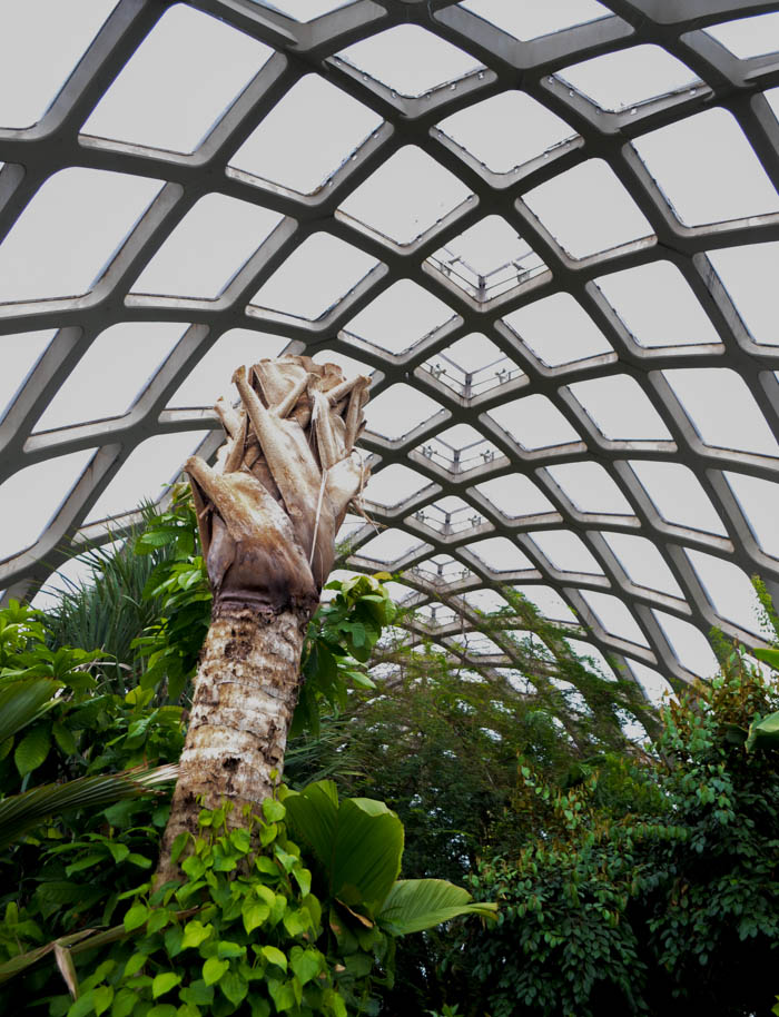 denver botanic gardens ceiling greenhouse design